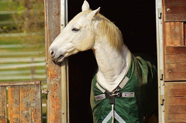bílý kůň v dece