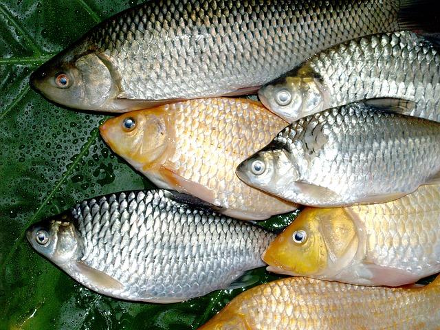různé ryby