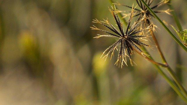 část trávy