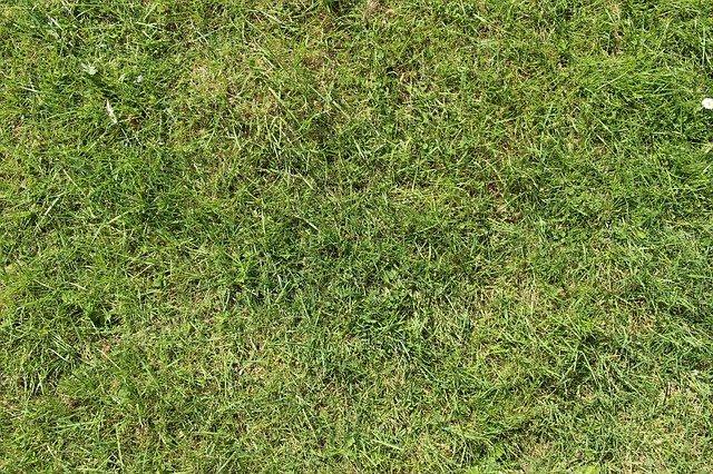 posekaná tráva